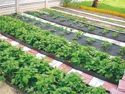 Поговорки и пословицы об овощах
